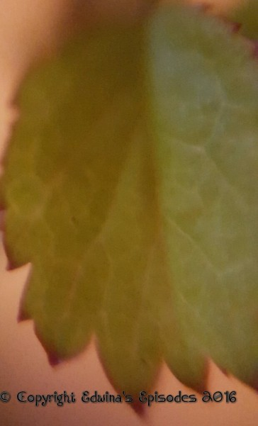 leaf, close-up, nature,