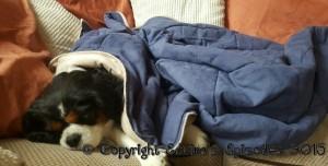 Roxy Snuggling